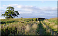 SJ5142 : Bridleway through maize field west of Whitchurch, Shropshire by Roger  Kidd