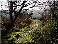 SK4613 : Path near the summit of Bardon Hill by Mat Fascione