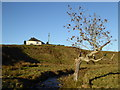 NX9195 : Shepherd's cottage and windswept ash tree, Benthead by Alan O'Dowd