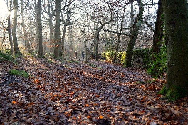 Winter in Hay Wood, Derbyshire