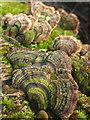 SD4777 : Bracket fungus on a log by Karl and Ali
