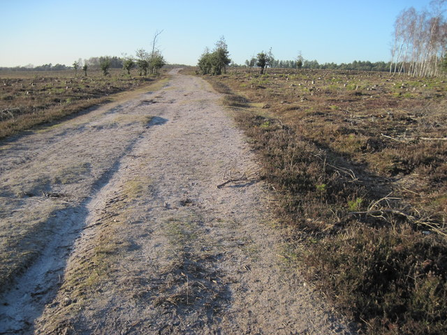 Track in Longdown Inclosure