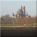 TL5680 : Ely Cathedral in the distance by John Sutton