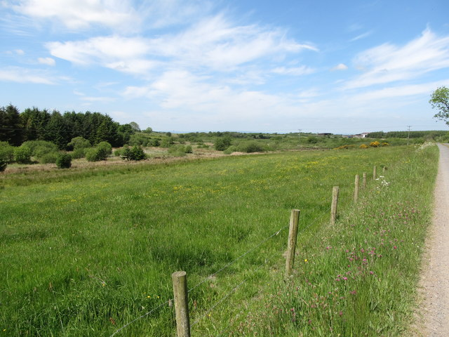 Hay meadow between the Cargaclogher Road and a wooded wetland area