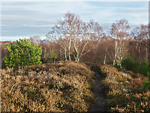 NH6750 : Footpath along the crest of Taindore Wood by Julian Paren