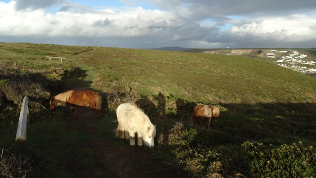 Shetland ponies above Western Cove, Portreath