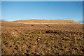 NN9203 : View across the bog towards Bald Hill by Doug Lee