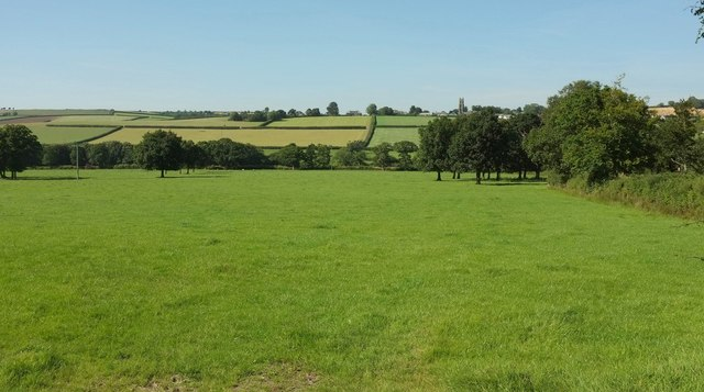 Field with trees by Poadmarsh Hill