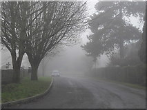 TF1505 : The Green, Glinton, on a foggy day by Paul Bryan