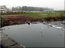 SO5012 : East bank of the River Monnow, Monmouth by Jaggery