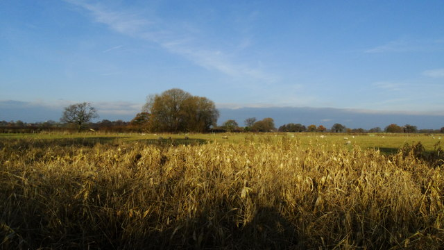 Pastureland NW of Smithy Green, Lower Peover