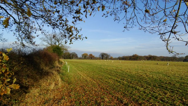 Last of the autumn colours in field boundary, NW of Smithy Green, Lower Peover