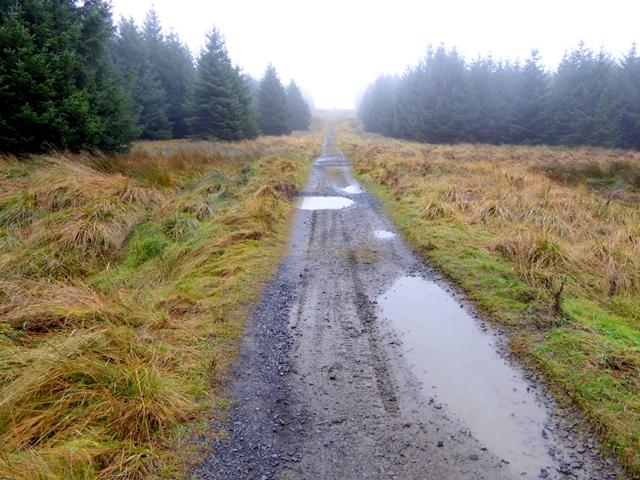 Track through Wark Forest