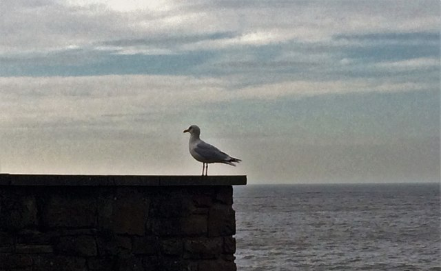 Gull at Maryport Promenade by Richard Thomas