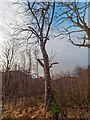 NH4651 : Horse Chestnut next to the Falls of Orrin by valenta