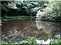 TQ7914 : Ornamental lake, Claremont School by Patrick Roper