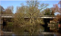 SU9778 : Black Potts railway bridge over the Thames by Robert Eva