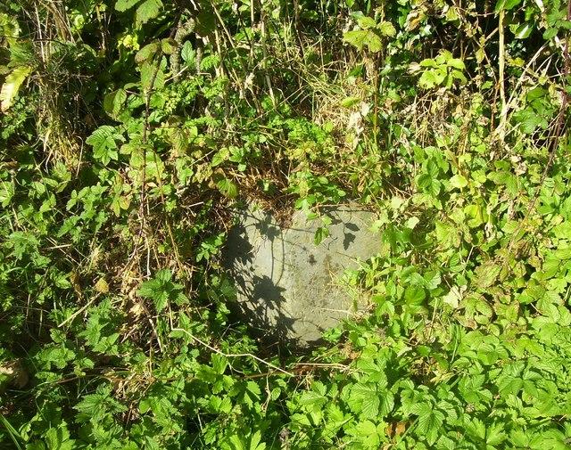 Laugharne - parish boundary stone hidden in hedge