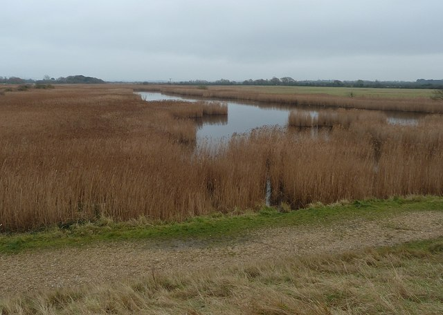 Reeds and wetland north of Thorney Island
