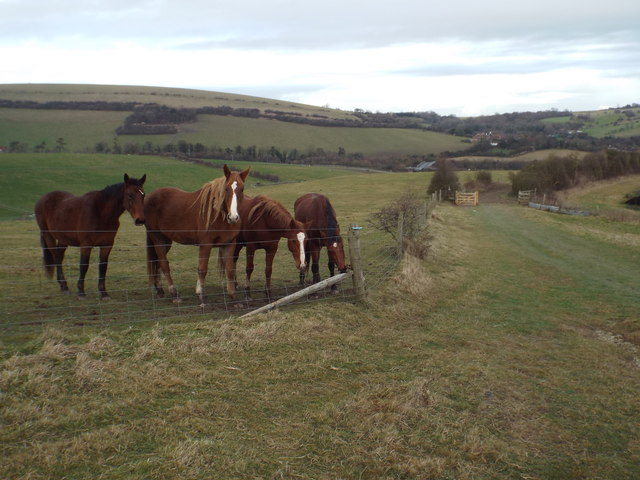 Horses on the South Downs