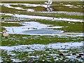 SK1165 : Frozen pond in a sheep field by Ian Calderwood