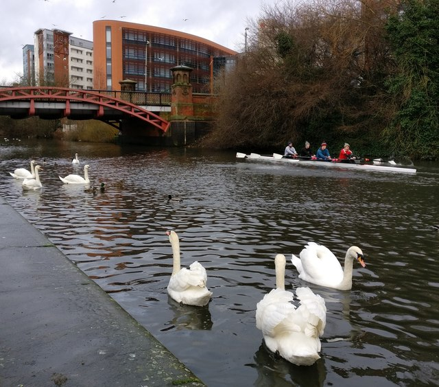 Rowers on the Grand Union Canal in Leicester