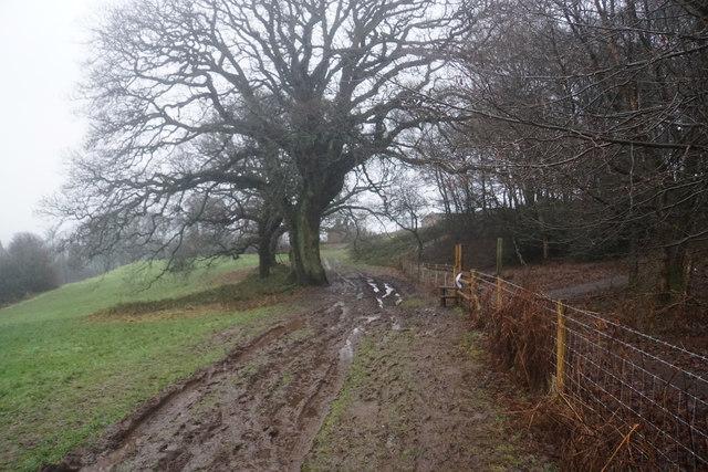Muddy path to Tittensor