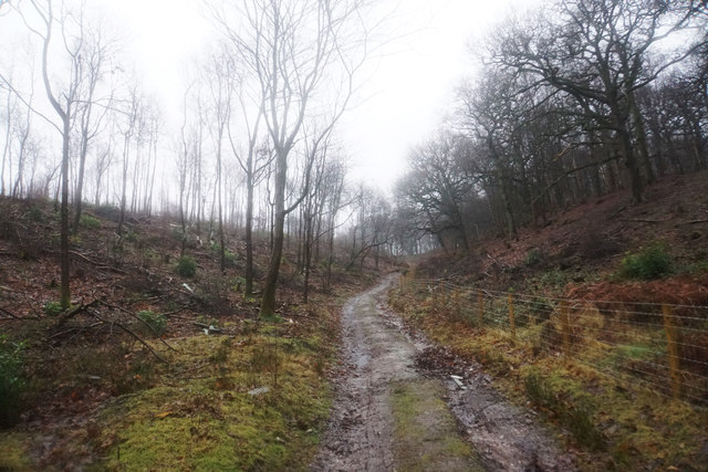 Track up to Tittensor Hill