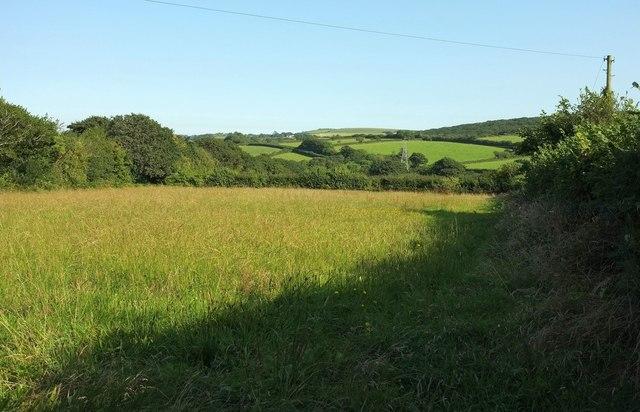 Field, Mulberry