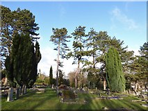 TQ3355 : Caterham Cemetery: early January 2017 (k) by Basher Eyre