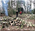 TQ7819 : Coppicing in Killingan Wood by Patrick Roper