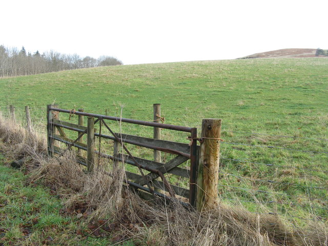 Borders gate and pasture