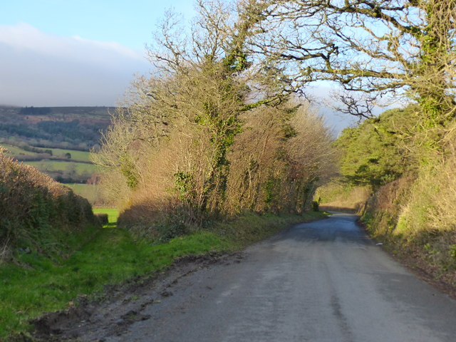 Byway, road and winter tree scene near Haytor Vale