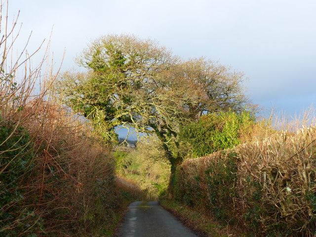 Road at Cross Parks, north of the cross roads, near Ilsington
