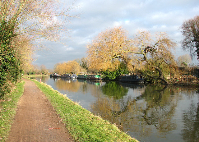 Fen Ditton: stripping the willow