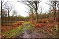 SO8060 : Track in Monkwood Nature Reserve, near Monkwood Green, Worcs by P L Chadwick