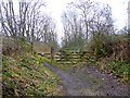 NZ0119 : Tees Railway Path at Cotherstone by Oliver Dixon
