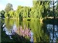 SU9948 : Guildford - River Wey by Colin Smith