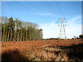 TG4600 : Power line on the eastern edge of Fritton Wood by Evelyn Simak