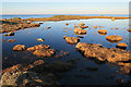 NJ9166 : Clifftop Pond by Anne Burgess