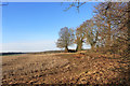 SU8389 : Winter Field, Widmere Farm by Des Blenkinsopp