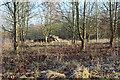 SU8182 : Woodland near Hurley by Des Blenkinsopp