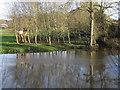 SP2965 : River Avon rising, southeast Warwick by Robin Stott