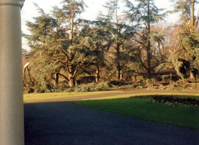 Tree damage, Memorial Park c. 1990