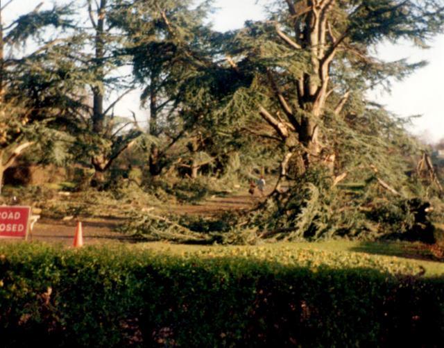 Tree damage, Memorial Park c.1990