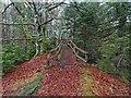NH8449 : Footbridge over the Allt Dearg - Cawdor Wood by valenta