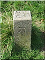 SJ4166 : A Chester Waterworks Company marker post and a bench mark by John S Turner