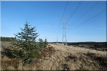 NS5012 : Power line by the Black Water by Richard Webb