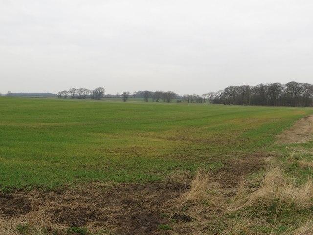 Arable land east of Dinnington