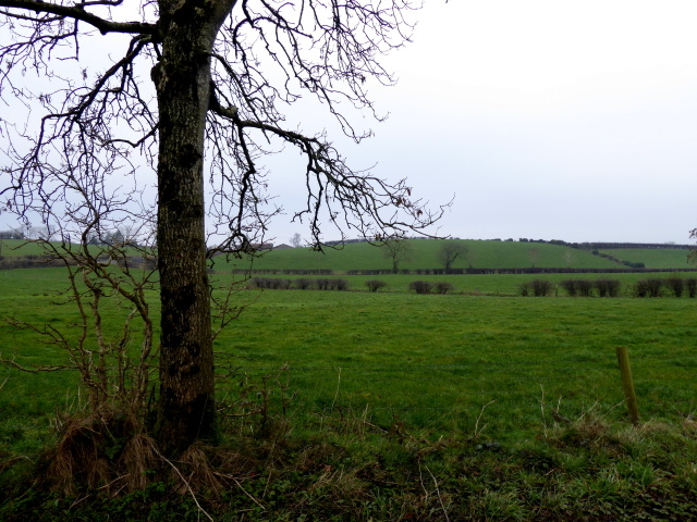 Tree, Beragh